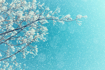 Winter tree. Winter snowy tree branches against sunny sky. Winter nature background with space for text
