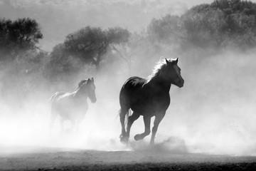Fototapeta Wildpferde im Nebel