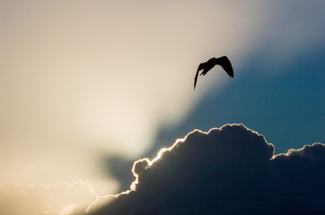 Silhouette of bird in flight against clouds and sky