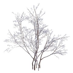 Winter Tree On Snow Isolated White 3D Illustration