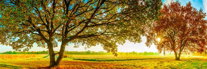 Landschaft im Herbst mit zwei großen Eichen