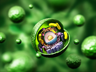 Animal cell anatomy on green background. 3D illustration