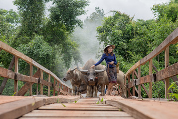 Thai woman wearing typical Thai dress, on bridge and Buffalo bac