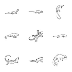 Lizard icons set. Outline illustration of 9 lizard vector icons for web