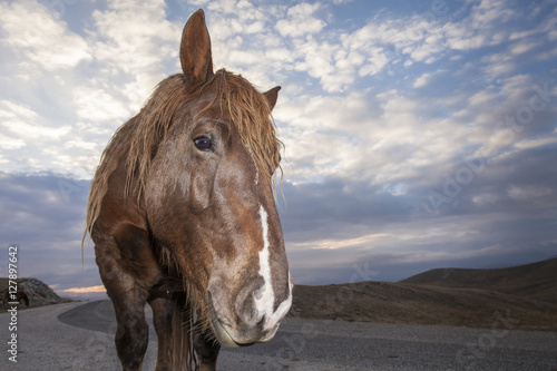 Close up portrait of sad horse. Blue sky background with clouds