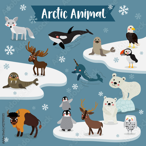 Arctic Animal cartoon. Penguin, Polar Bear, Reindeer. Walrus. Moose. Snowy Owl. Arctic Fox. Eagle. Killer whale. Bison. Seal. Puffin. Narwhal. Vector illustration.