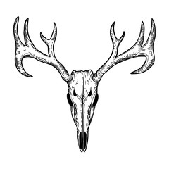 stylized Deer Skull sketch hand drawn original illustration. design for clothing print, postcards, cards, cover, tattoo design bohemian boho outline style. isolated on white background