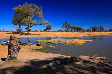 Water hole in Africa. Tipical African ladscape with dark blue sky. Water lake in Botswana. Trees with pond.