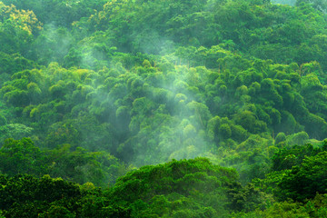 Tropic forest during rainy day. Green jungle landscape with rain and fog. Forest hill with big beautiful tree in Santa Marta, Colombia. Green wood, rainy day. Mountain birdwatching in South America.