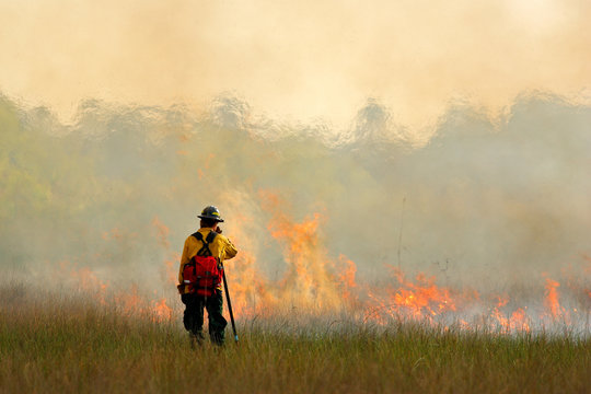 Wildfire in Everglades, grass in flame and fume. fireman with flame in the wild nature. fire fighter working with wildfire. Wildlife scene from nature. Forest in big fire in February, Florida, USA