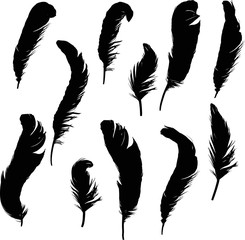 group of eleven black isolated curled feathers silhouettes