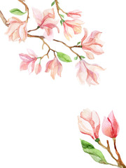 magnolia watercolor