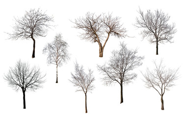 set of eight trees without leaves
