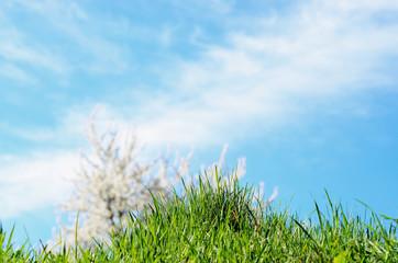 spring blossom against blue sky