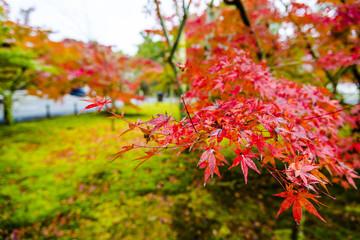 Japanese style garden in fall.