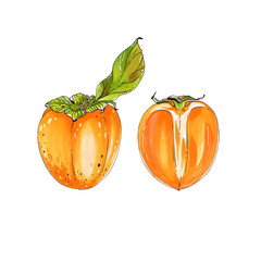 Isolated color sketch markers persimmon on white background