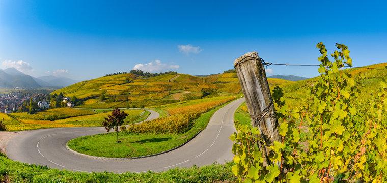 Wine Road, Vineyards of Alsace in France