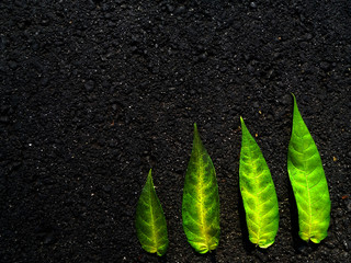 Four green leaves isolated on black asphalt, bright color photography, fall season