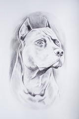 Pencil sketch of the dog on a white background.