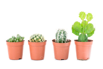Set cactus, succulent plants in pot, isolated on white. Interior