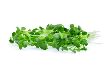 Growing microgreens on white background