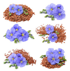Collection of flax seeds with flowers
