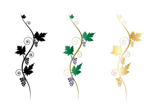 Ornamental floral decorative grapes vine clusters graphic elements or banners, text dividers.