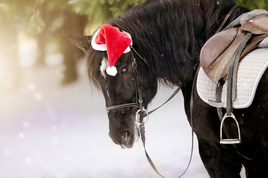 Portrait of the saddled horse in a cap in a a red Santa Claus hat