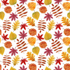 Autumn leaves seamless pattern. Hand painted with watercolors