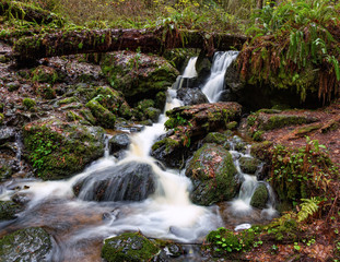 Small Waterfall in the Rain Forest