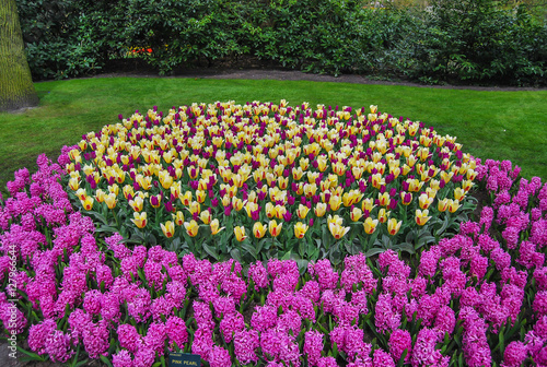 Tulipanes rosas amarillos y jacintos rosas en los jardines de keukenhof en holanda stock - Jardines de tulipanes en holanda ...