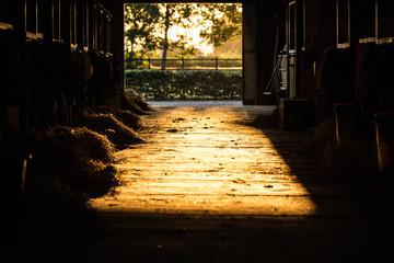Sonnenuntergang im Stall