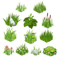 Vector collection of different grass and flowers