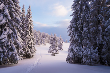 Fototapete - Winter landscape with footpath in the snow
