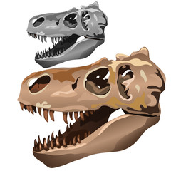 Fossilized skull of ancient animal. Vector