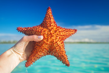 hand holding a red starfish