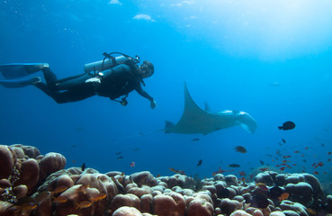 Spoed Fotobehang Duiken Diver swimms with manta ray