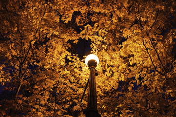 Maple tree canopy street lamp