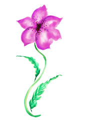 Watercolor Vintage Flower isolated on white background. Petals violet, magenta.