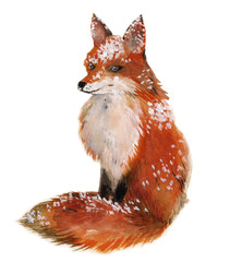 Fox in the snow isolated in a white background, watercolor