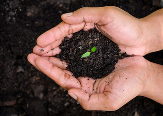 Hand of farmer holding sprout plant. Growing and nurturing tree