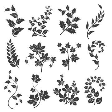 Curly branches silhouettes with leaves isolated on white background. Vector illustration