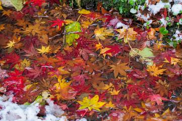 Poster de jardin Melon Autumn leaves and snow