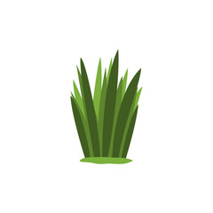 Green Swamp Sedge Weed Isolated Element Of Forest Landscape Design For The Flash Game Landscaping Purposes