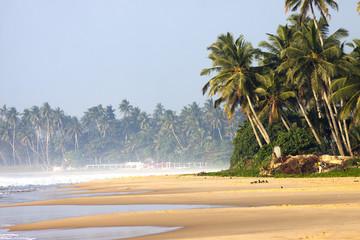 Silhouette of palm trees beach