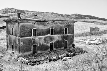 In Sicily, a flock of sheep can repair itself from hot sun of August, taking advantage of the exterior and interior of an abandoned train station