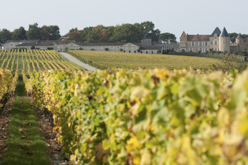 Vineyard and Chateau d'Yquem, Sauternes Region