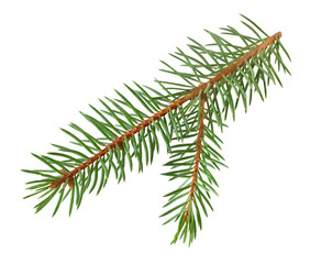 Christmas tree branch isolated on white background with clipping path