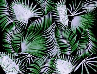 leaves of palm tree background