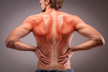 Back view of athlete man torso with muscle structure Wall mural